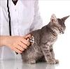 Ветеринарные клиники в Старой Руссе
